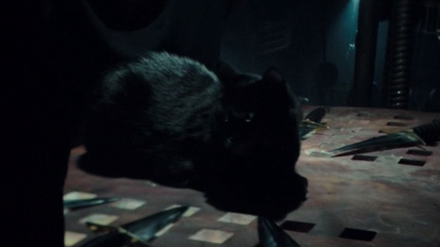 Regression - black cat sitting among knives on table