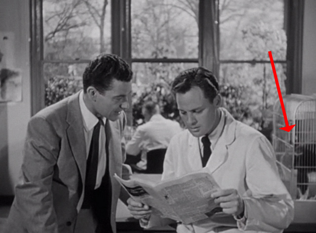 Revenge of the Creature - gray and white cat in cage behind John Agar