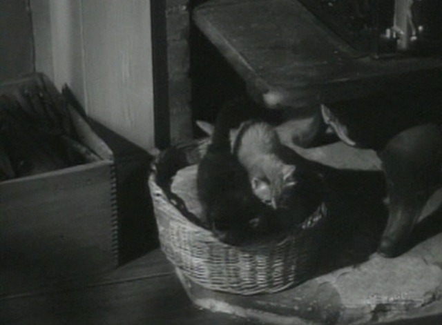 Roughly Speaking - two kittens in a basket