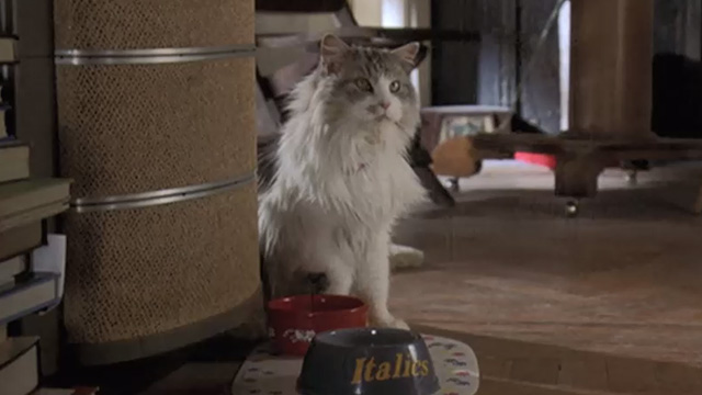 Runaway Bride - long-haired cat Italics sitting by food bowl