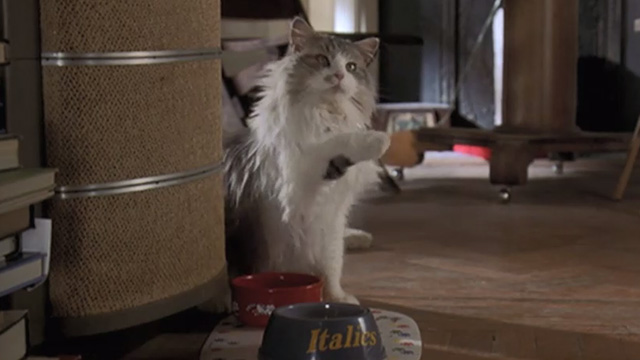 Runaway Bride - long-haired cat Italics begging by food bowl