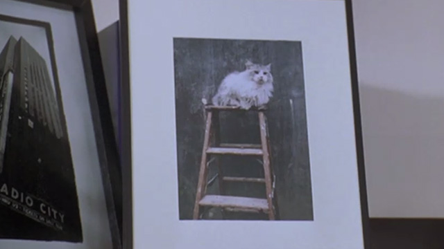 Runaway Bride - photo of long-haired cat in frame