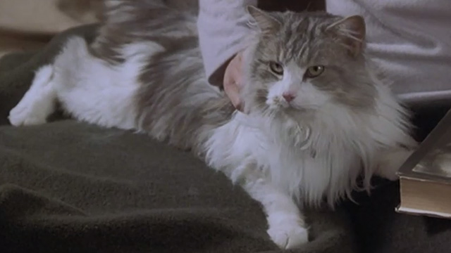 Runaway Bride - long-haired cat Italics sitting on couch