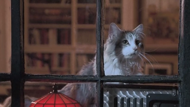 Runaway Bride - long-haired cat Italics looking out of window
