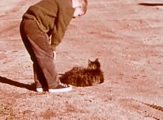Safety with Animals - little boy approaches Maine Coon cat