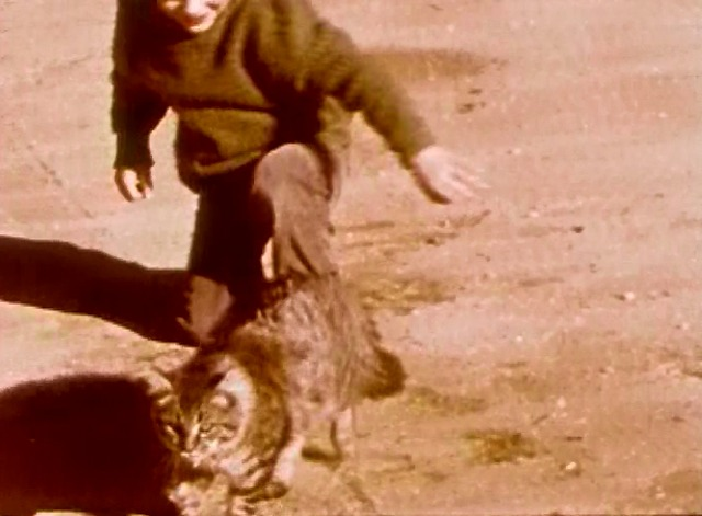 Safety with Animals - Maine Coon cat walks away from little boy