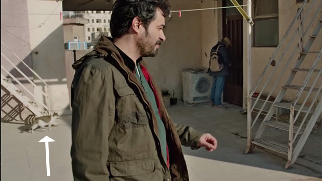 The Salesman - Emad Etesami Shahab Hosseini and Babak Karimi at apartment with tabby cat in background