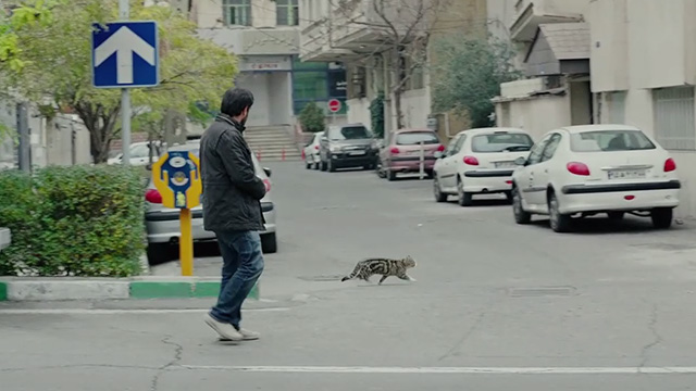 The Salesman - Emad Etesami Shahab Hosseini on street with Bengal tabby cat