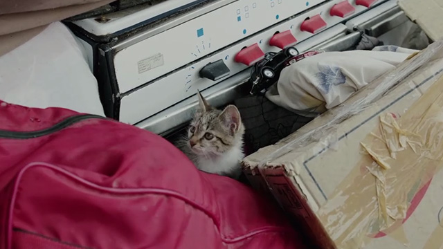 The Salesman - tabby kitten in amongst items