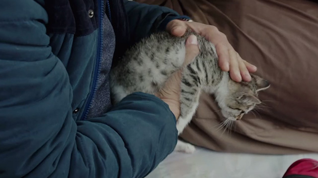 The Salesman - tabby kitten being picked up