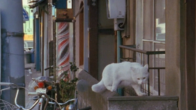 Sans Soleil - white cat on balcony