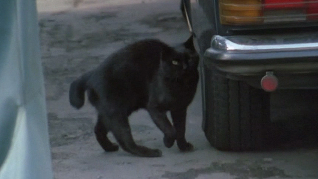 Sans Soleil - black Japanese bobtail cat by parked car