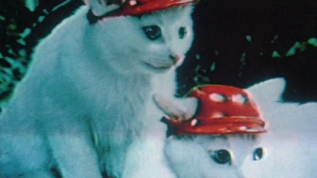 Sans Soleil - white cats wearing hats on tv screen