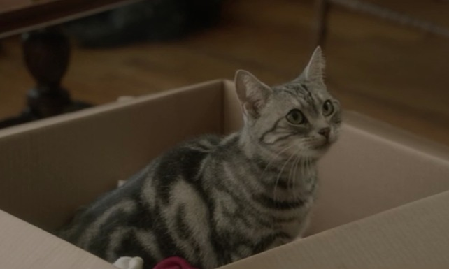 Save the Date - Ferdinand cat in cardboard box