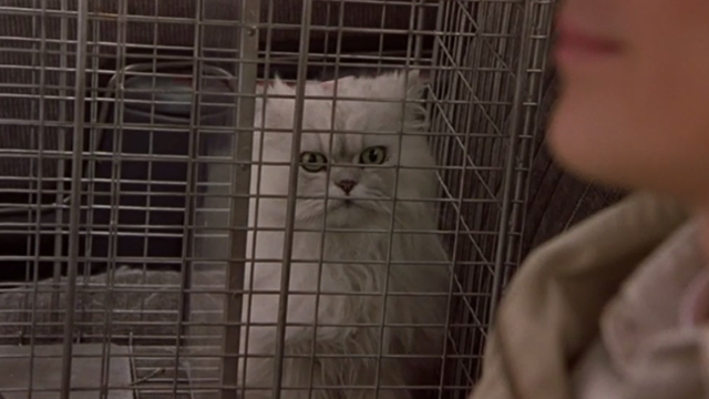 Say It Isn't So - white long-haired cat in cage