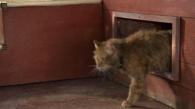 Say It Isn't So - long-haired ginger tom cat coming out from beneath house