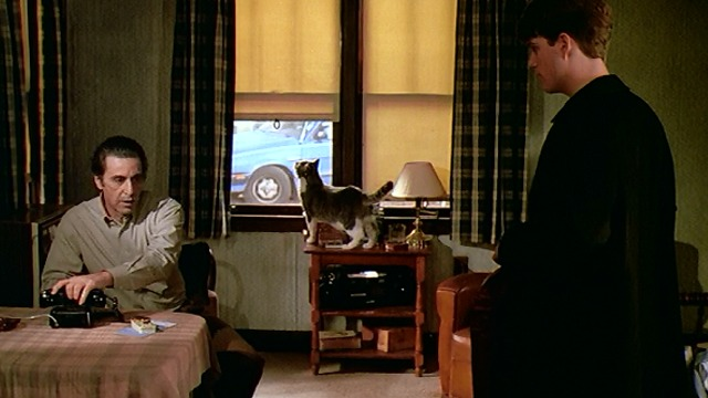 Scent of a Woman - gray and white cat Tommy standing by window