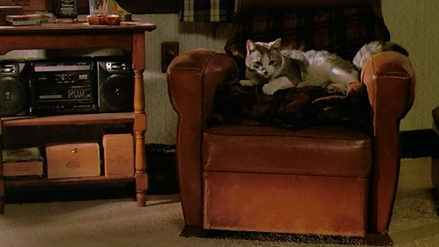 Scent of a Woman - gray and white cat Tommy in chair