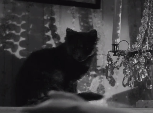Secrets of Women - small dark kitten on mantel as hand reaches to hang up phone