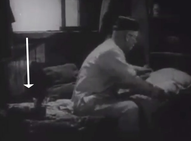 Shadows - Yen Sing Lon Chaney on bed with Bengal tabby cat