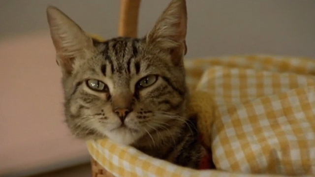 Shoot First, Die Later - tabby cat Napoleon in basket