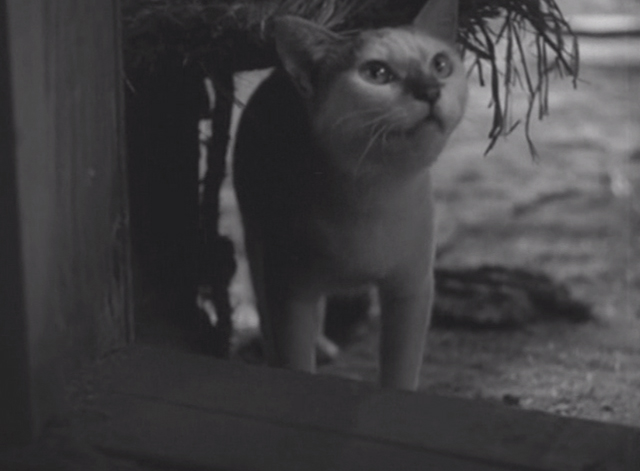 Shozo, a Cat and Two Women - white and calico cat Lily in doorway meowing