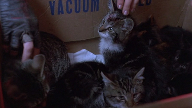 Sid and Nancy - box of kittens