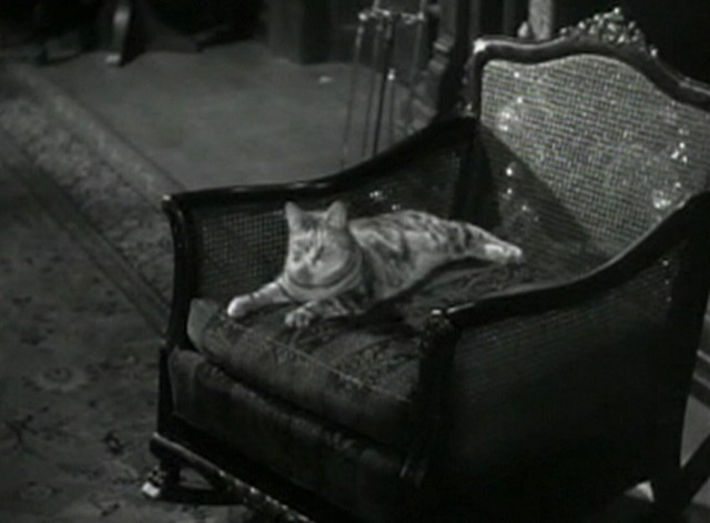 Side Streets - tabby cat Harry sitting in chair