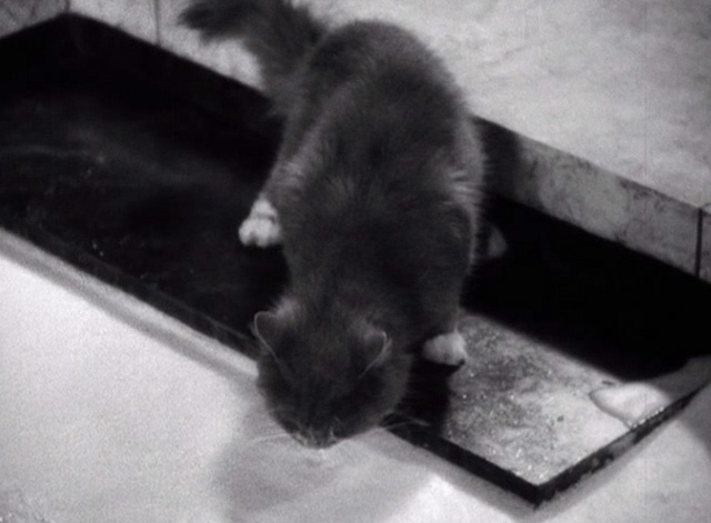 The Sign of the Cross - cat drinking from milk bath