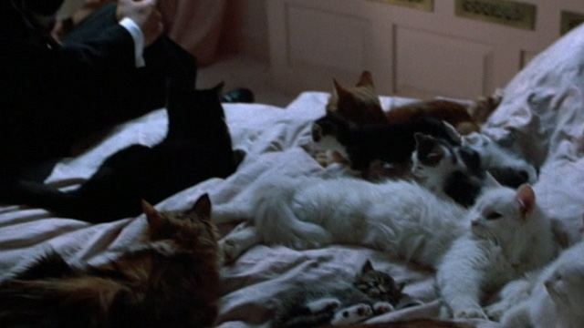 Six Degrees of Separation - multiple cats lying on bed