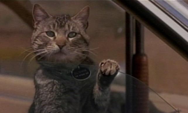 Sleepwalkers (1992) | Cinema Cats