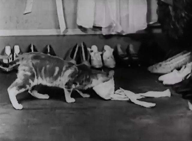 Slipping Wives - cat sticks head into stocking