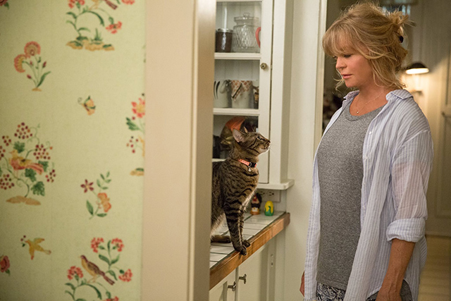 Snatched - Linda Goldie Hawn with tabby cat Turtle on kitchen counter