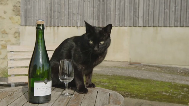 Somm 3 - black cat on table next to Bride Valley bottle and glass