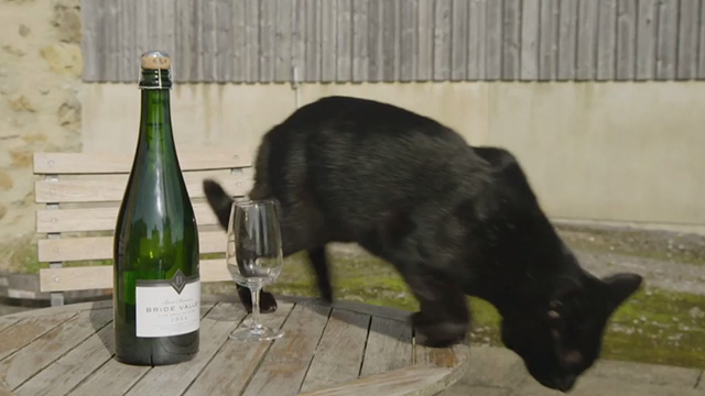 Somm 3 - black cat about to jump off table next to Bride Valley bottle and glass