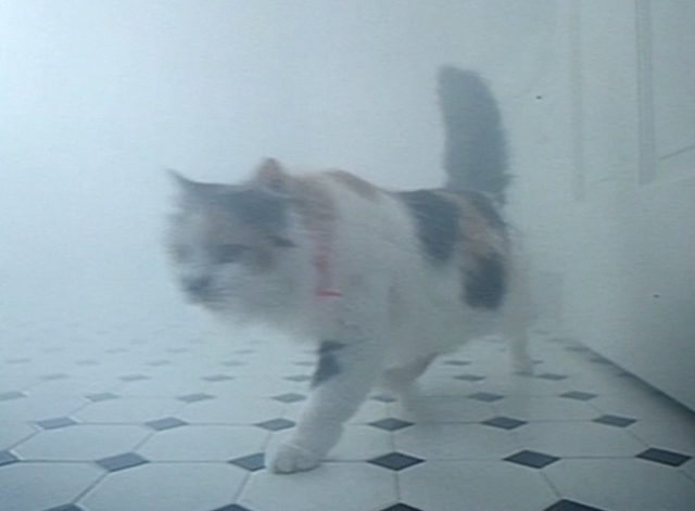 Spirit Lost - long haired calico cat Spider walking through steamy scene
