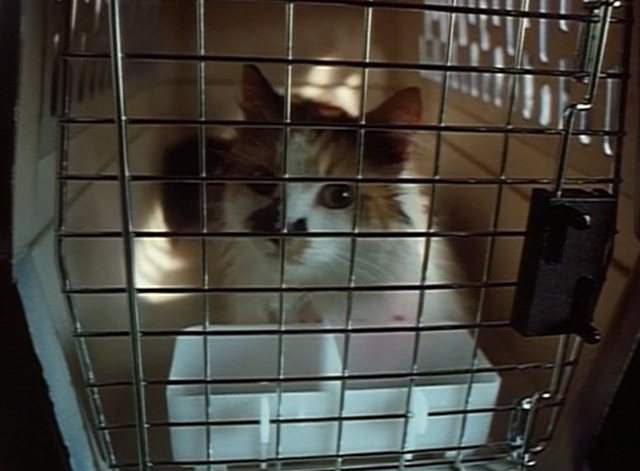Spirit Lost - long haired calico cat Spider in carrier