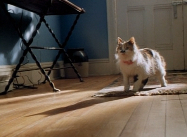 Spirit Lost - long haired calico cat Spider standing in hallway