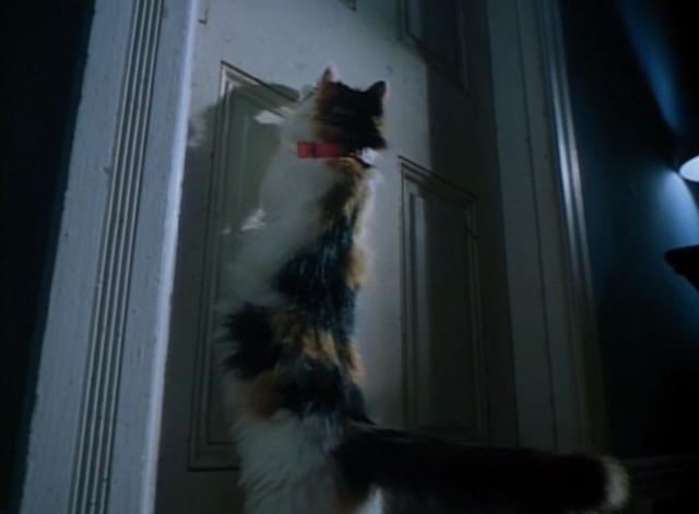 Spirit Lost - long haired calico cat Spider pawing at closed door