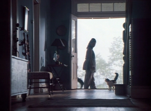 Spirit Lost - long haired calico cat Spider in doorway with Willy Regina Taylor