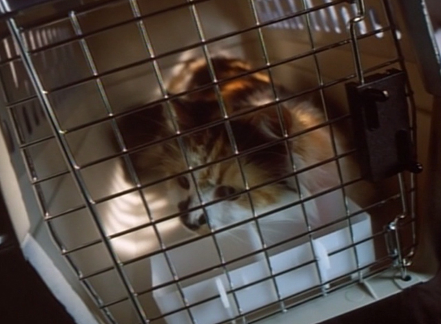 Spirit Lost - long haired calico cat Spider in cat carrier