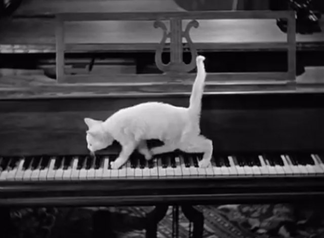Spook Louder - white kitten walking across piano keys