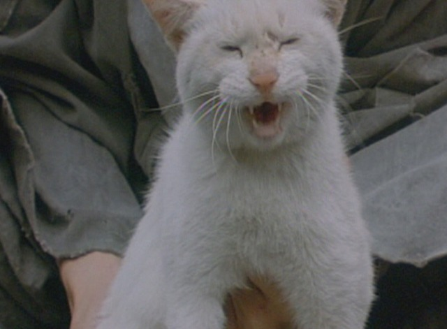 Spring, Summer, Fall, Winter . . . and Spring - white cat meows