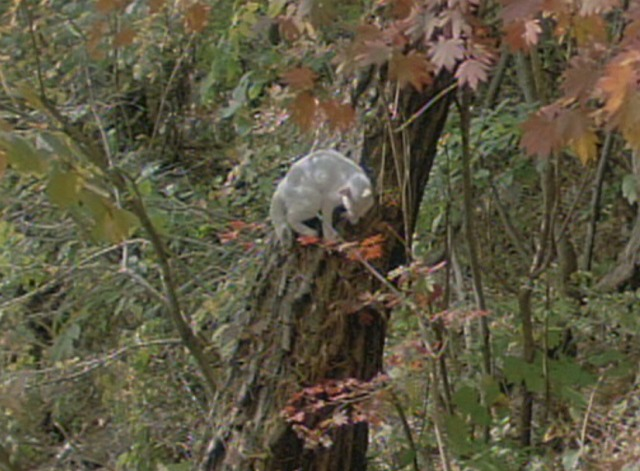 Spring, Summer, Fall, Winter . . . and Spring - white cat in tree
