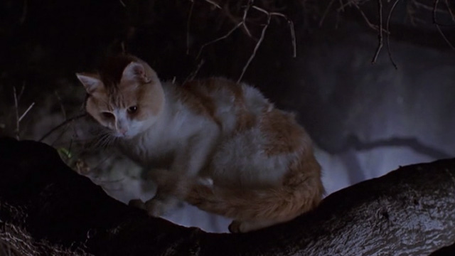 Star Kid - orange and white cat sitting on tree branch