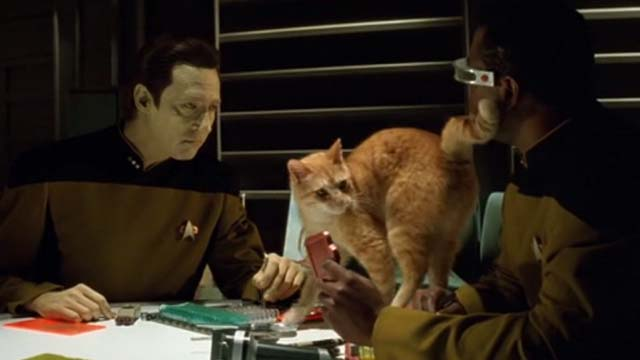 Star Trek: Generations - Spot orange tabby cat on table between Data Brent Spiner and Geordi Levar Burton