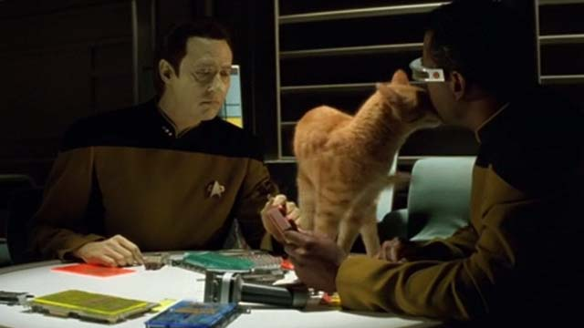 Star Trek: Generations - Spot orange tabby cat on table between Data Brent Spiner and rubbing Geordi Levar Burton