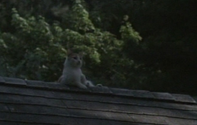 Still of the Night - orange and white cat on top of house