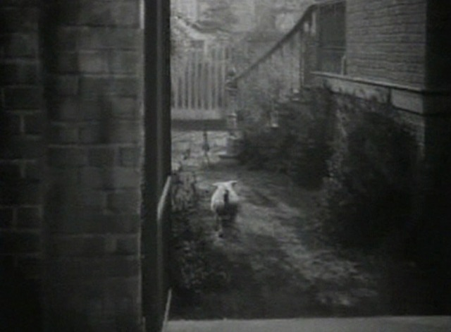 The Strawberry Blonde - Tessie white and tabby cat being chased by dog