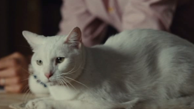 Straw Dogs 2011 - white cat Flutie sitting on counter